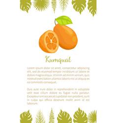 kumquat exotic juicy fruit poster text leaf vector image