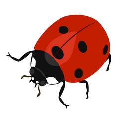 Ladybird icon on a white background insect vector