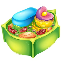 Plant cell vector image