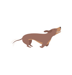 purebred brown dachshund dog running vector image