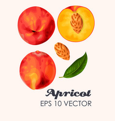 ripe peaches whole and slice vector image