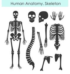 set human skeleton all vector image