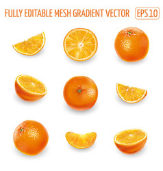 Set ripe oranges on a white background vector