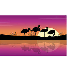 collection lake scene with flamingo silhouettes vector image