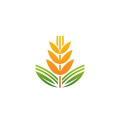 An a wheat spike vector
