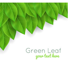 Background with green leaves realistic vector
