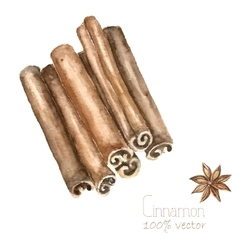 Watercolor cinnamon and anise vector image