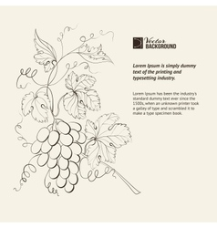Engraving of grapes branch vector image vector image