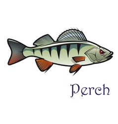 Cartoon perch vector image