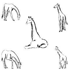 Giraffes A sketch by hand Pencil drawing vector