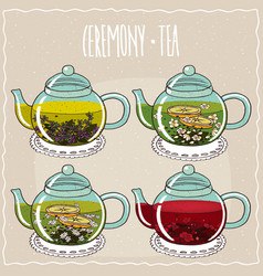 Set of different brewed herbal teas vector