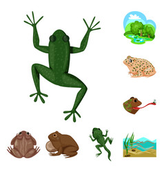 design frog and anuran logo collection vector image