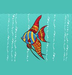 Freshwater angelfish aquarium fish vector