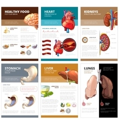 Internal human organs chart diagram infographic vector
