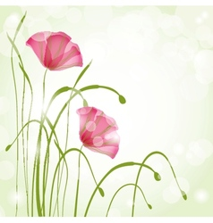 Spring card with beauty poppies vector image