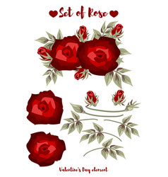valentines day element with rose collection vector image