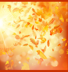 autumn background with natural leaves and bright vector image
