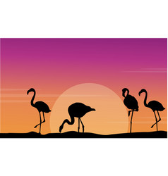Flamingo silhouette scene at sunset vector