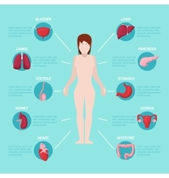 Human Body Anatomy Medical Scheme vector
