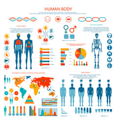 Concept of human body colored infographic cartoon vector