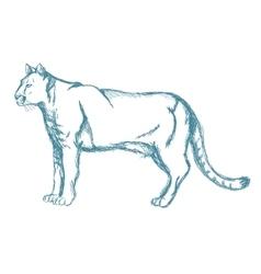 panther sketch blue vintage vector image