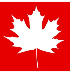 Maple Leaf White vector image