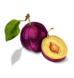 Blue natural organic plum fruit vector