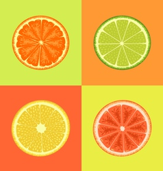Citrus on different colors backgrounds vector image