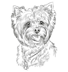 hand drawing portrait of yorkshire terrier vector image