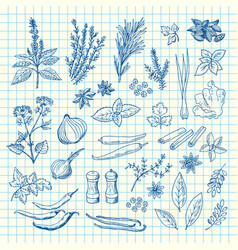 Hand drawn herbs and spices on cell sheet vector