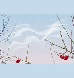 red berries and branches of mountain ash on vector image