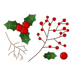 Red berry with leaf and branch christmas vector