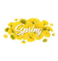 spring dandelion flowers composition vector image