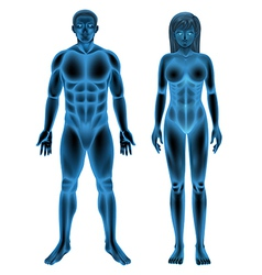 Male female human body vector image