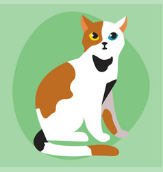 cat breed cute pet portrait fluffy white black red vector image vector image