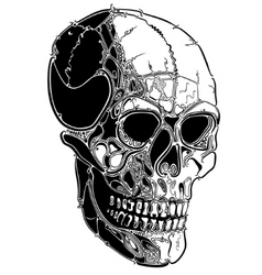 skull lines vector image