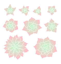 Gradient succulent plant set vector