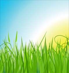 Grass background vector