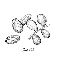 hand drawn of dates fruits on white background vector image