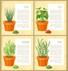 Natural condiments grown in flowerpots at home set vector