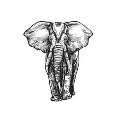 White elephant buddhism religion sketch symbol vector