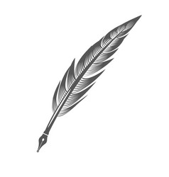 Grey feather pen vector