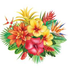 arrangement from tropical flowers vector image vector image