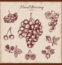 berries hand drawn design vector image