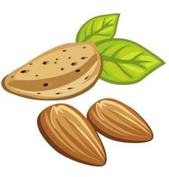 Composition of three delicious almond nuts vector