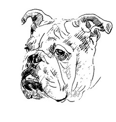 hand drawing sketch of english bulldog head vector image
