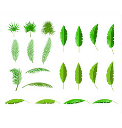 Tropical green leaves jungle leaves set vector
