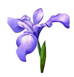 violet iris flower vector image