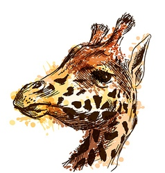 Colored hand sketch head giraffe vector