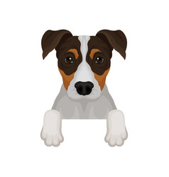 jack russell terrier hanging on invisible fence vector image